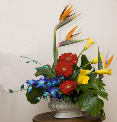 Arrangement with Bird of Paradise